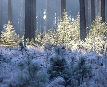 Holterberg - winter1