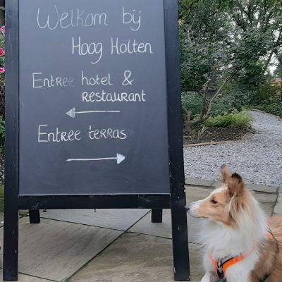 Honden zijn welkom