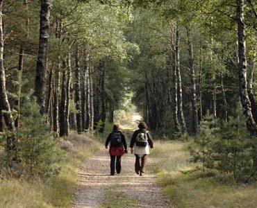 12-09-2007. Bossen met bosbessen en wandelaars op de Holterberg. Nationaal Park Sallandse Heuvelrug. Pieterpad. © wim van der ende