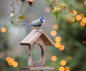 Vogeltjes winter kerst